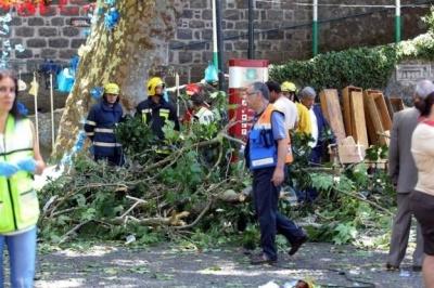 Напередодні матчу «Марітіму» - «Динамо» на Мадейрі падіння дерева забрало життя 12 людей