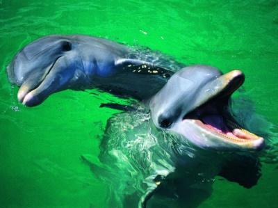 Бельгійського дельфіна назвали в честь кривдника збірної Росії